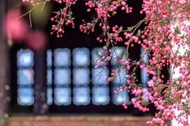 中式古窗:赏一窗花开盼