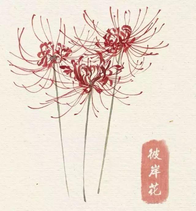 40款绝美水彩花卉手绘插画赏析