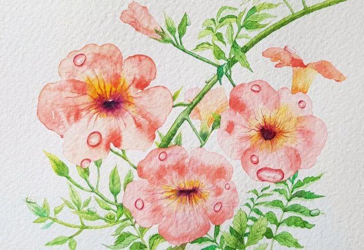四季水彩花卉插画,惊艳唯美