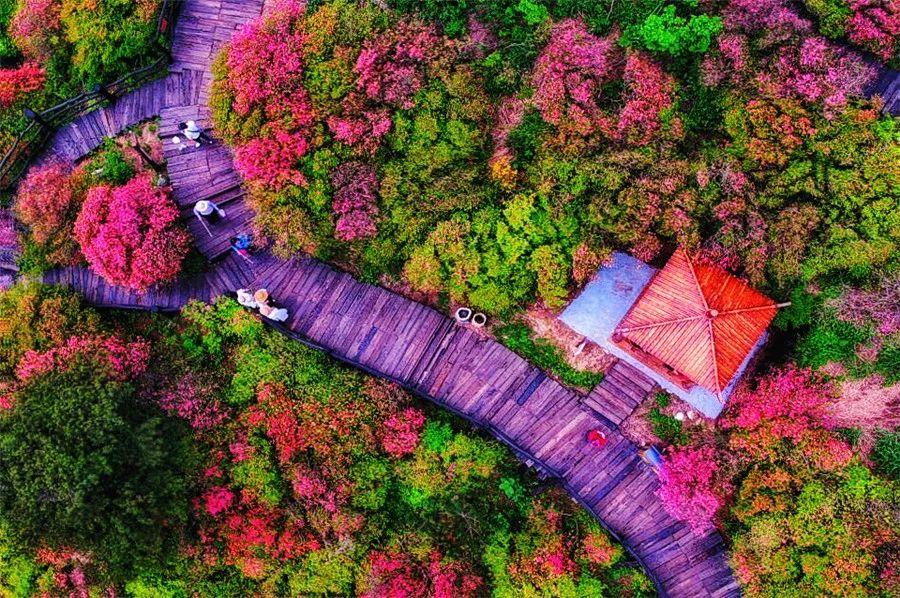 麻城·云梦如故,山里的房子就