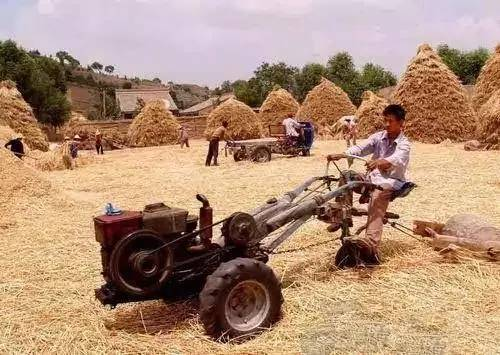 民俗文化童趣:二十年前割麦的