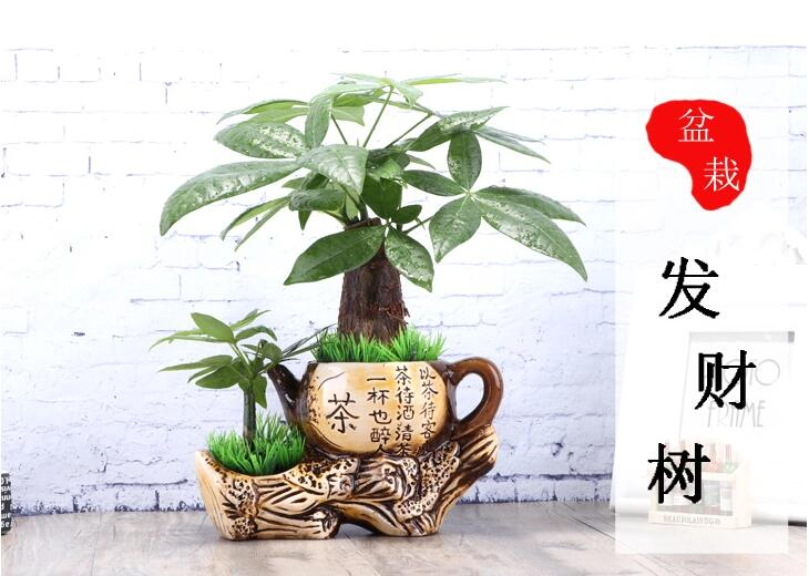 中国风发财树盆景