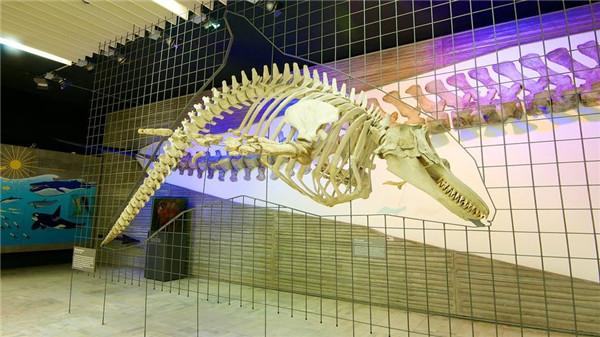 德国最大的自然博物馆,德国森根堡自然博物馆
