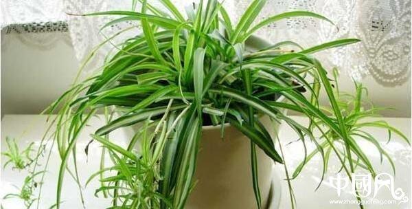 教你风水植物有什么