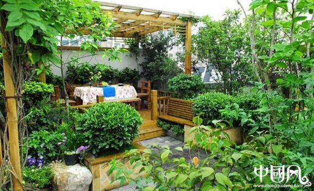 庭院适合种什么植物