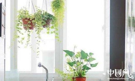 家中的风水植物讲究