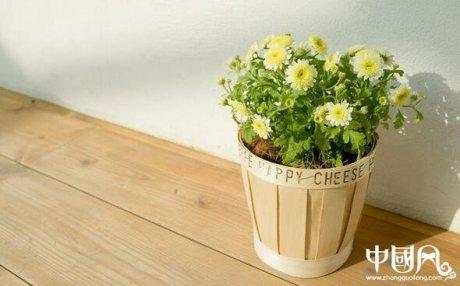 室内不适合养殖的植物