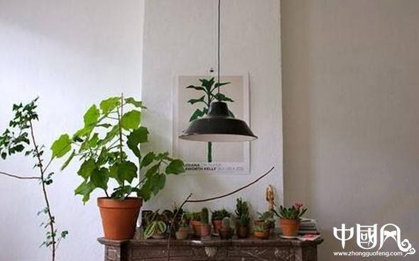 室内不适合种植的植物