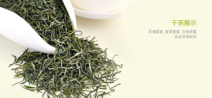中国十大名茶之信阳毛尖