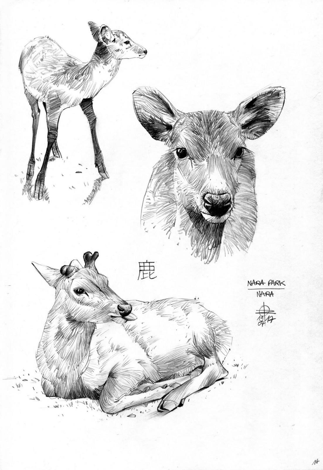 一组动物手绘插画