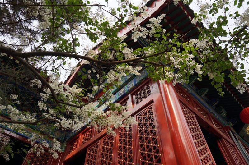 北京法源寺 佛教之胜地