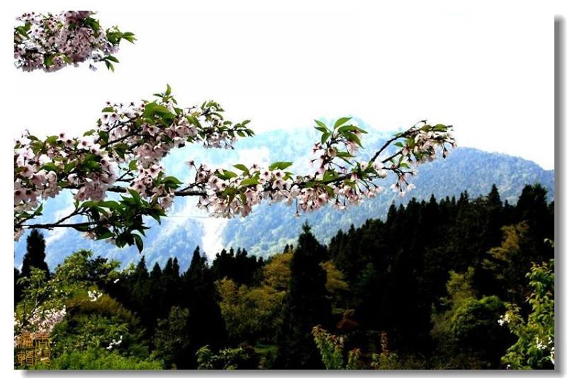 台湾阿里山风光摄影欣赏