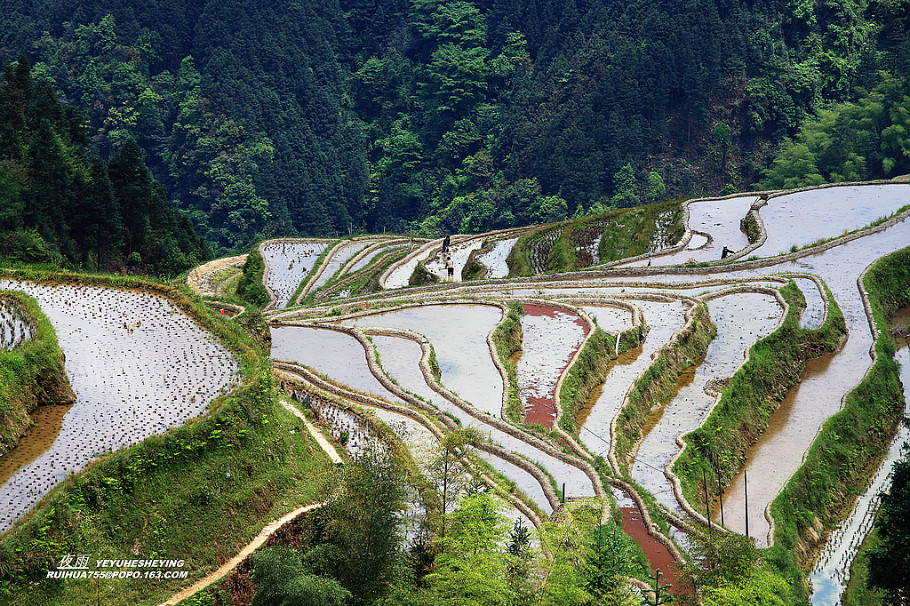 贵州苗寨梯田吊脚楼景色