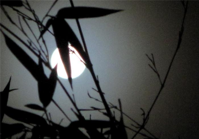 竹月清风的风景摄影