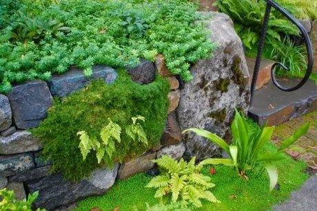 园林景观设计:石头缝里的景观