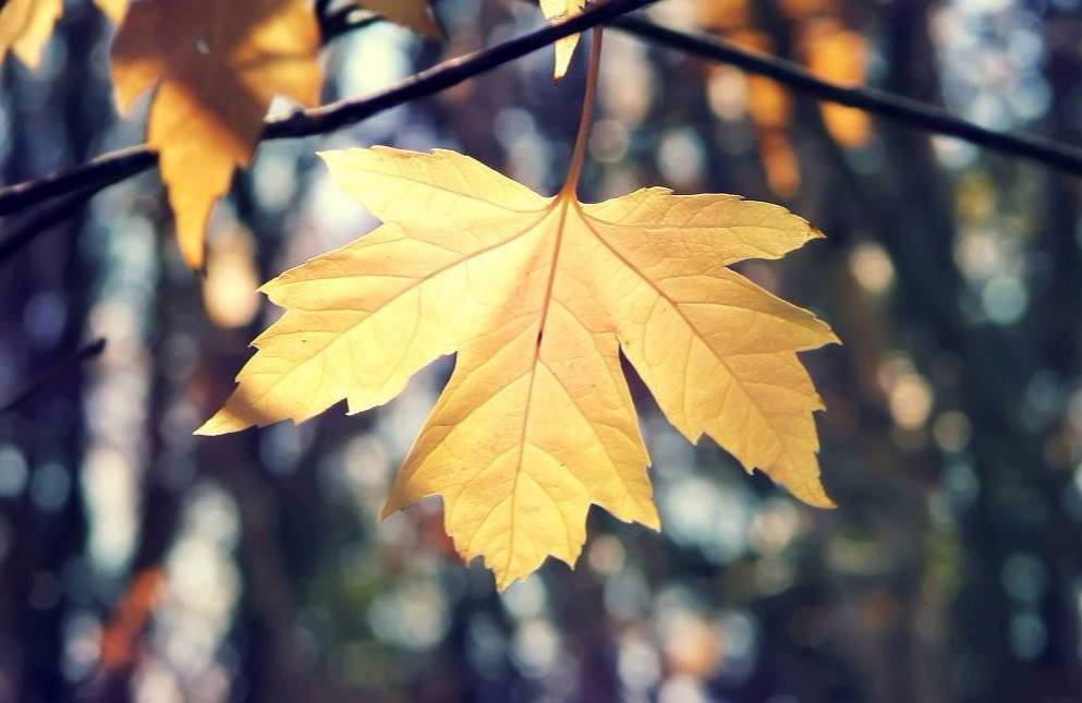 22款与秋相关的唯美句子,唯美古风句子