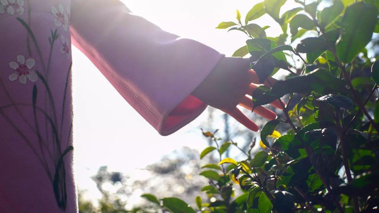 九华山·清竹里,延续和分享茶文化禅文化