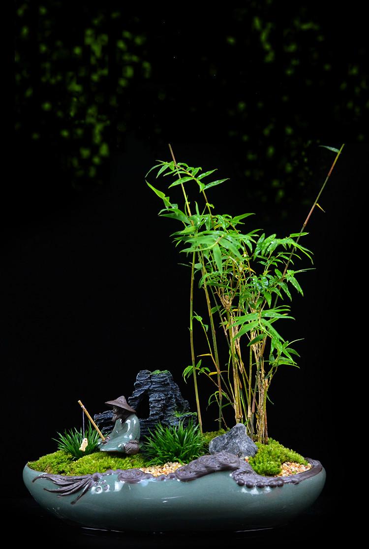 米竹雅致盆景,四季常青竹韵盆景图片