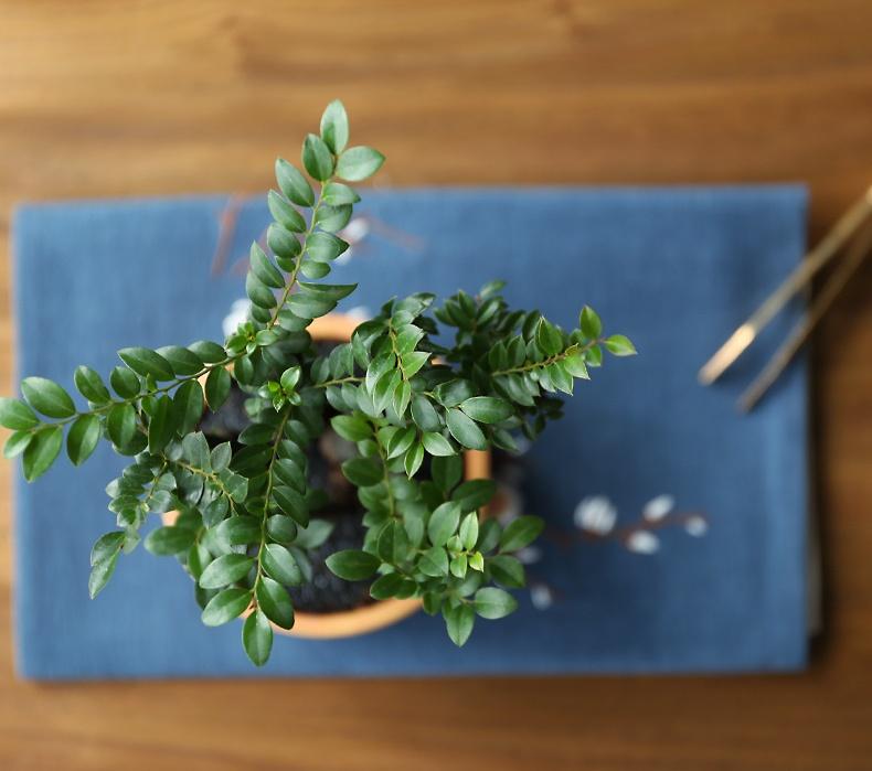 小叶紫檀盆景,黑骨茶样式盆景图片