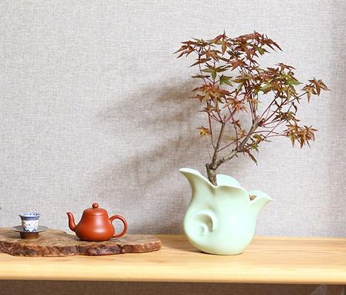 红枫树盆景,简约美观盆景图片
