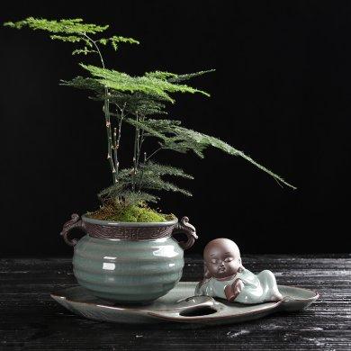 复古中国风文竹盆景,禅