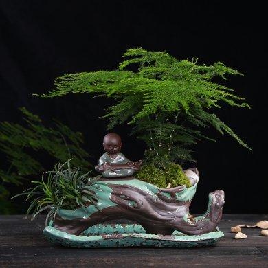 别具风味的文竹陶瓷盆景