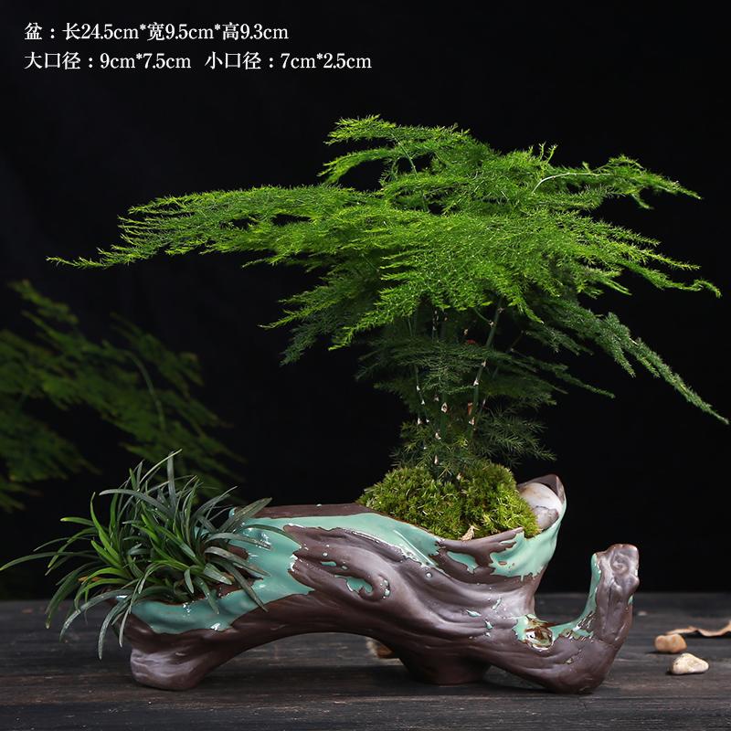 别具风味的文竹陶瓷盆景,禅意小和尚盆景图片