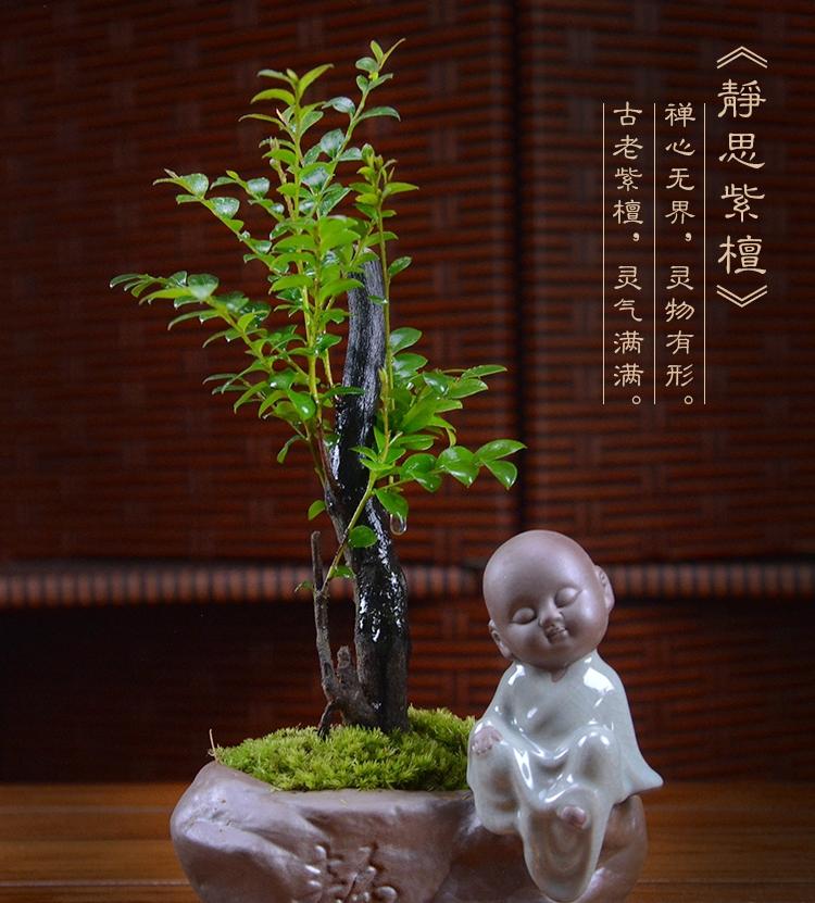 四季常青盆景,镇宅紫檀盆景图片
