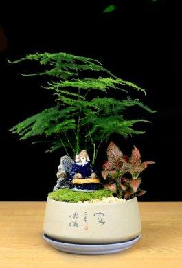 福禄桐文竹盆景,绿植苔藓微景