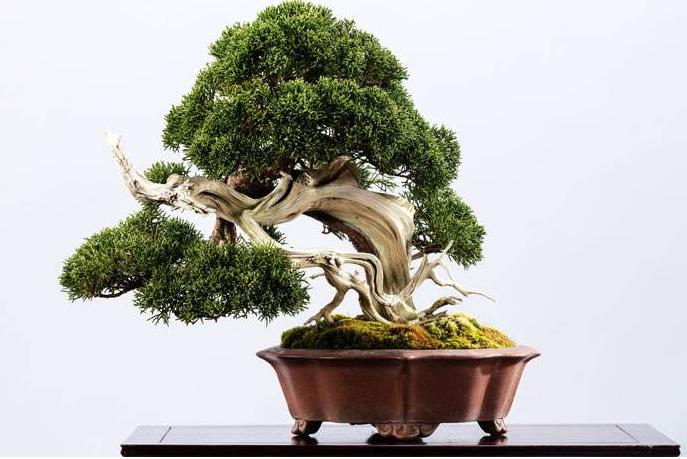 五款中国风陶瓷室内盆景