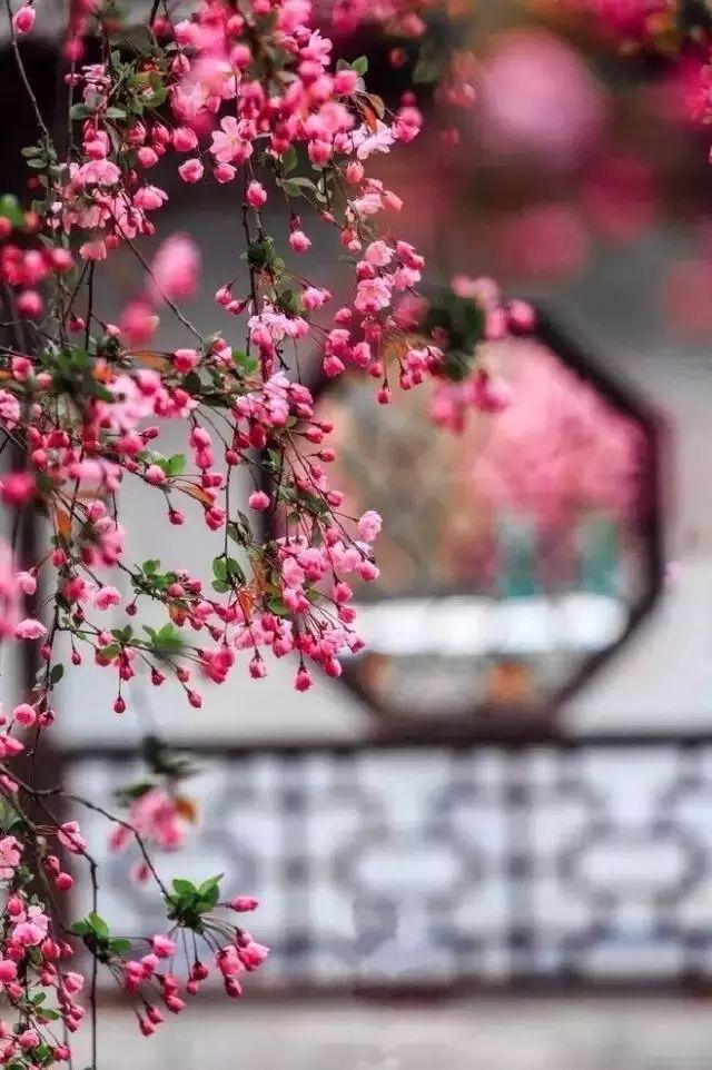 中国好声_中式古窗:赏一窗花开盼一世安好- 中国风
