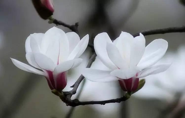 惊艳花朵风景图片:花开并蒂美哉!