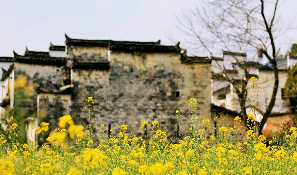 梦回西江,南昌,庐山,婺源