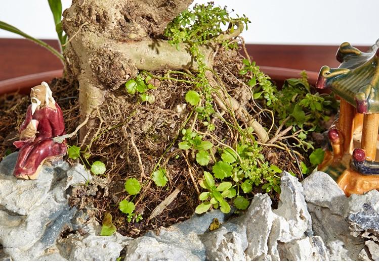 山紫甲石景,姿态万千盆景艺术!