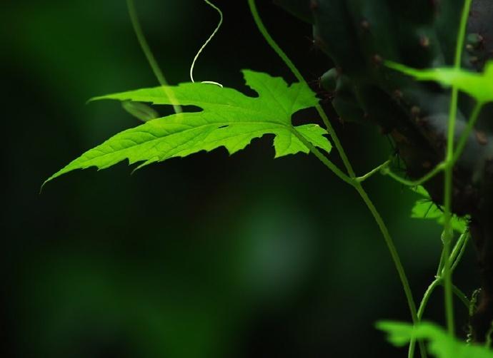 青丝绿叶迷人眼:一组清新植物风景摄影