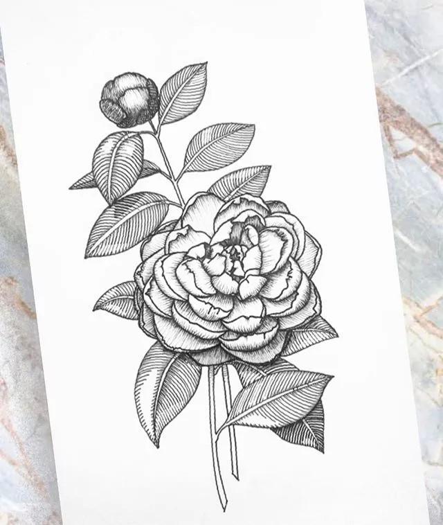 9款黑白简约植物插画:一丝一线的描绘