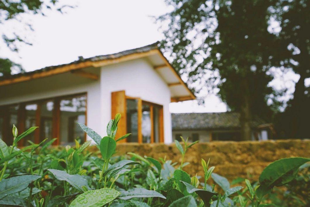 一所茶园里的民宿,过着乡下悠闲惬意的日子