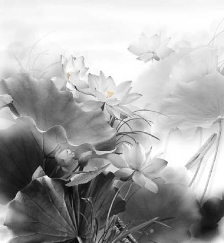 超美水墨荷花风景摄影,美的不可思议
