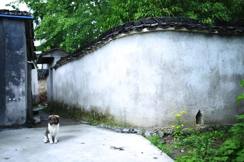 黄山·旧街墨野,浸染徽文化的地方