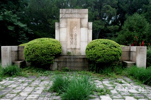 植物对墓地风水有何影响?植物与风水的联系