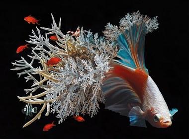 鱼和珊瑚:Lisa Ericson超现实主义
